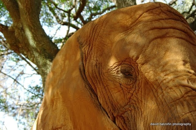 An Elephant never forgets...we revisit the Elephant Sanctuary near Brits