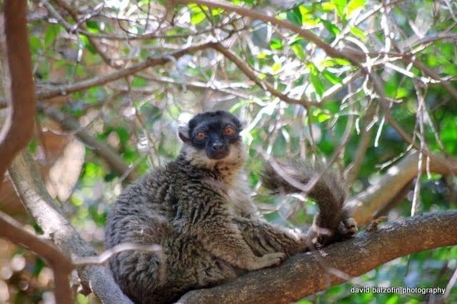Don't monkey around...we visit Bush Babies Monkey Sanctuary