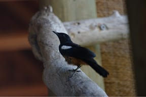 Birds at Madikwe game reserve... the feathered kind