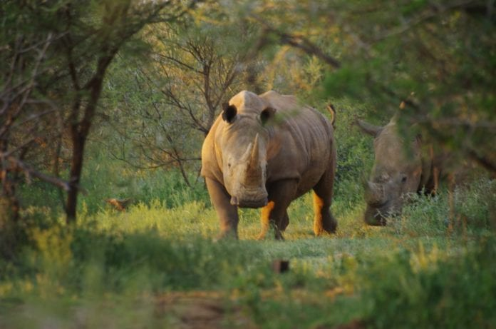 Is prevention better than cure? The rhino wars