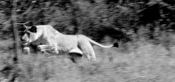 Wildlife in black and white...
