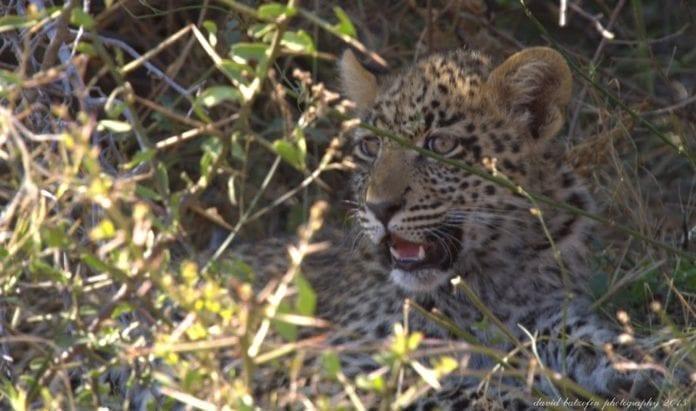 MORE wildlife at Marataba Safari Lodge, Waterberg