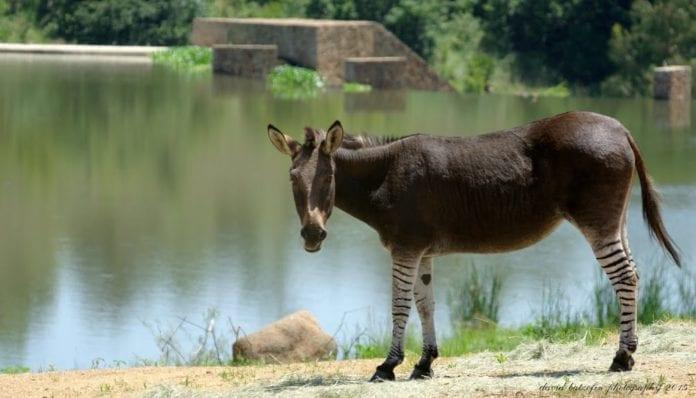Heia Safari Ranch...a sad farewell